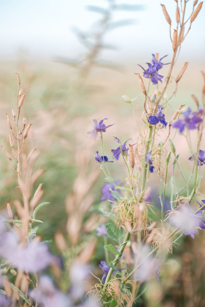 Wild Flowers by Relics of Rainbows Photo