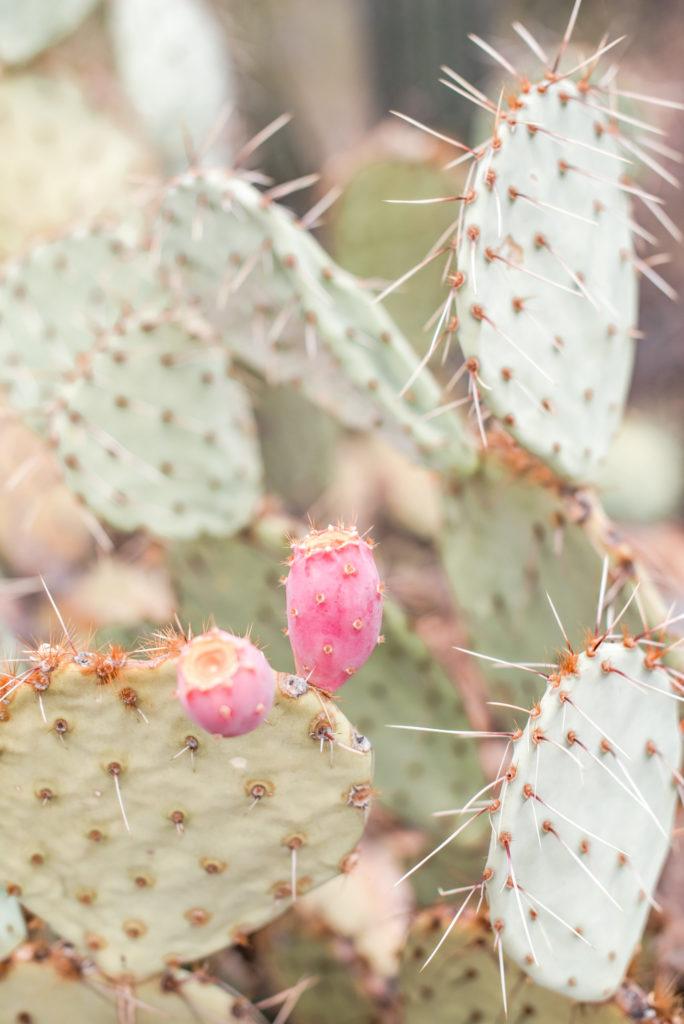 Flowering Cactus, Rellics of Rainbows Photo